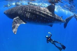 mocambique-marine
