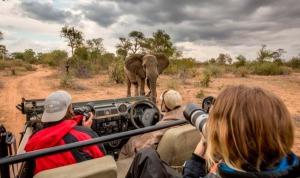 Wildlife-Photograph-Kruger-e1535454858608