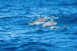 zanzibar-golfinhos