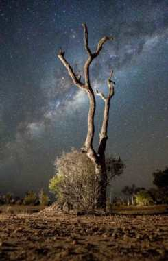 kruger-wildlife-photography-milky-way-e1537348973366